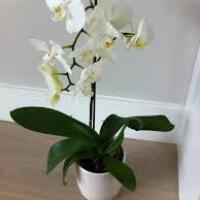 orchid planting