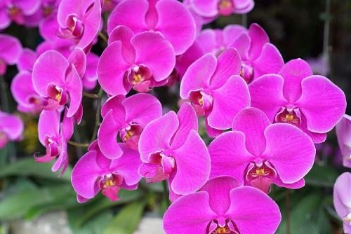 orchids-tropical-floral-exotic