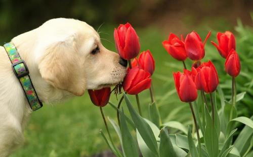 dog and flower